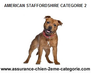 american-staffordshire