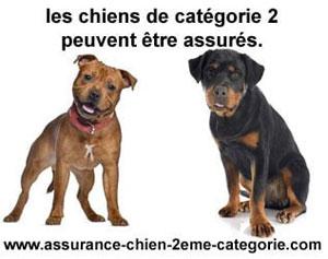 Assurance pour chien catégorie 2 responsabilité civile
