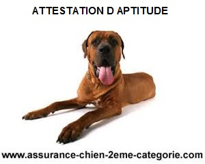 attestation-aptitude-pour-chiens-categorises