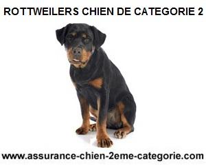 chien-deuxieme-categorie-rottweilers