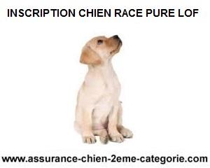 inscrivez-chien-race-pure-au-lof
