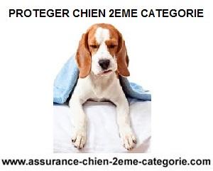 proteger-chiens-contres-maladies
